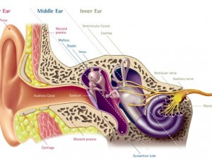 What Are The Different Types Of Hearing Loss